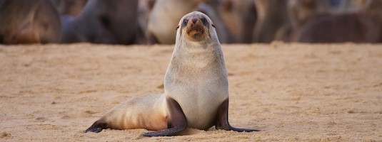 Facts about Sea Lions