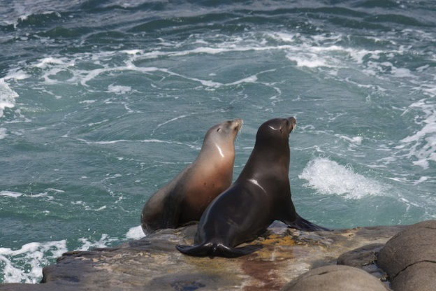 Where do Sea Lions live?