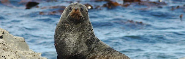 Sea Lion Habitat - Sea Lion Facts and Information