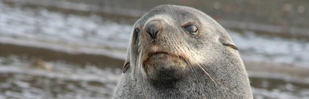 Sea Lions Endangered