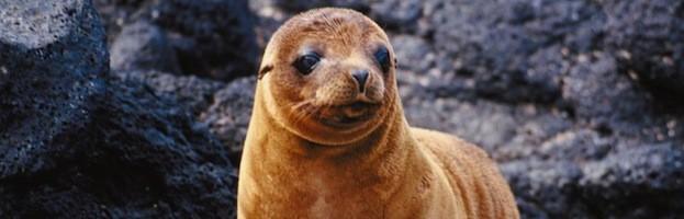 Sea Lion Pictures