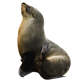 sea-lion-facts