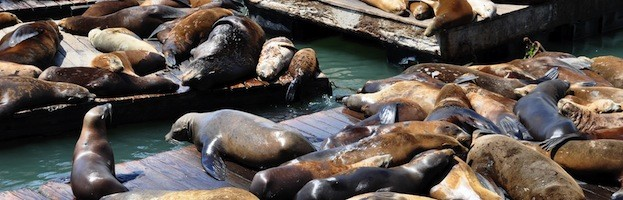 Sea Lion Social Structure
